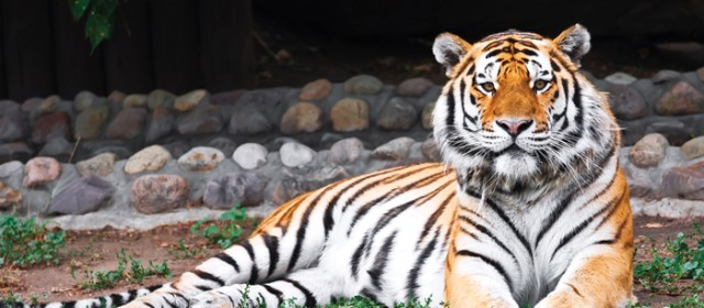 Freeing Captive Animals, Closing Zoos & Problems at Sea World
